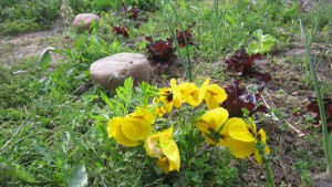 Flores del campo.