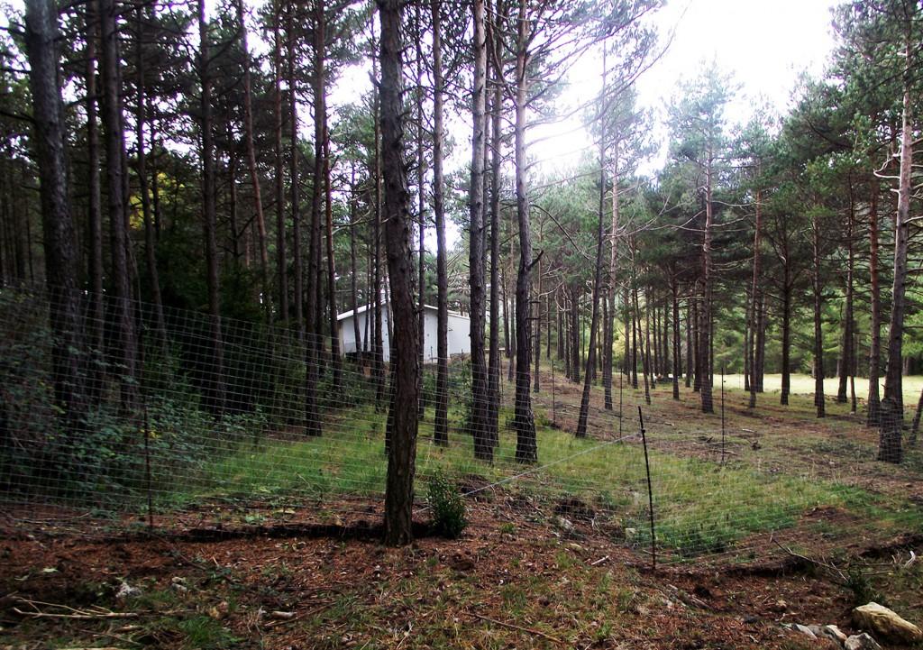 Extensión de terreno al aire libre de los gallineros de Cal Roio