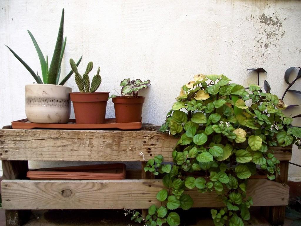 Jardín vertical que usa los palets como soporte