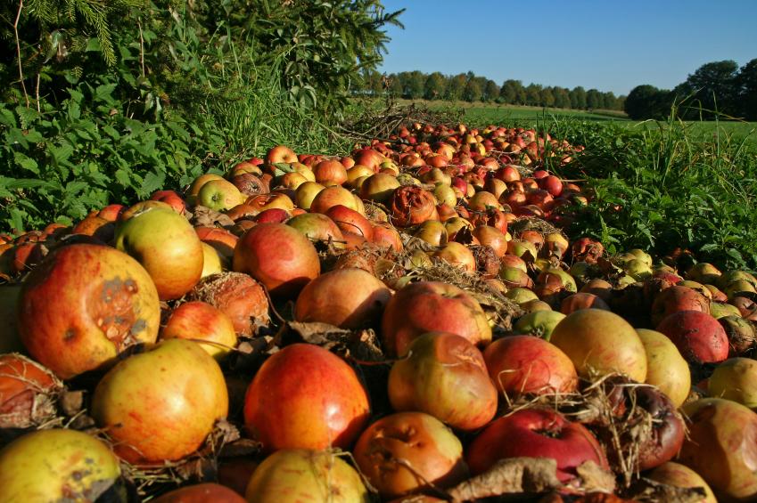 Mucha fruta y verdura por su aspecto exterior no es cosechada y es dejada en los propios campos