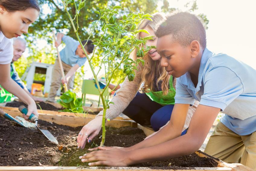 Un huerto como actividad dentro de la escuela, potencia el gusto de los alumnos por los alimentos más saludables.